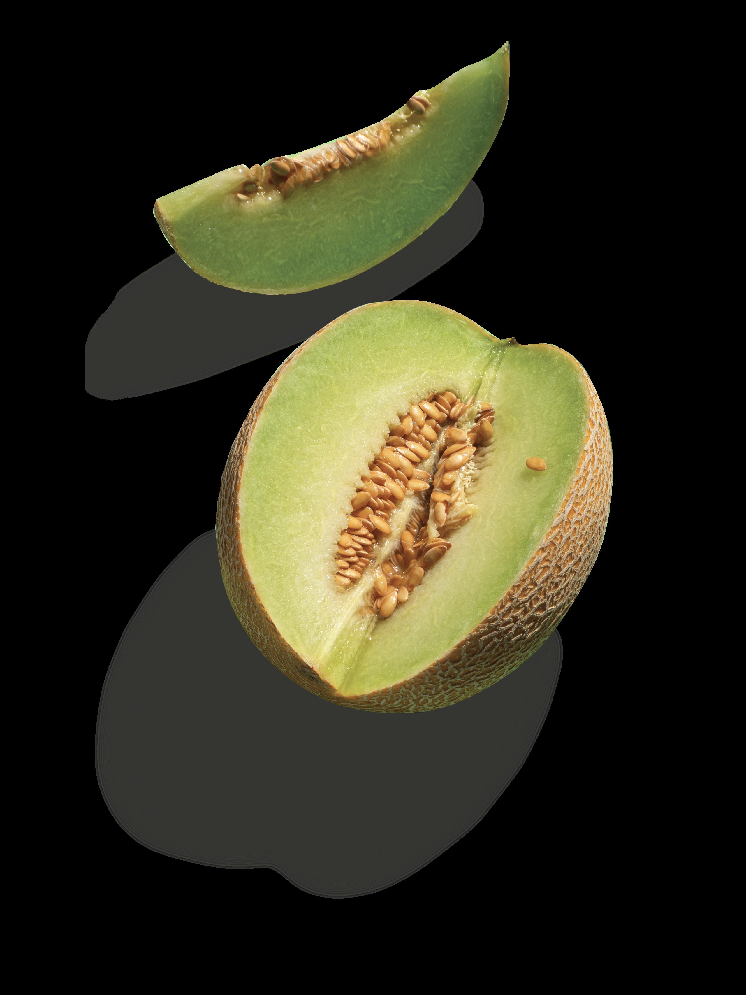 servicios-segalfs-melon-alimentacion-zaragoza